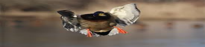 duck_hunting_2