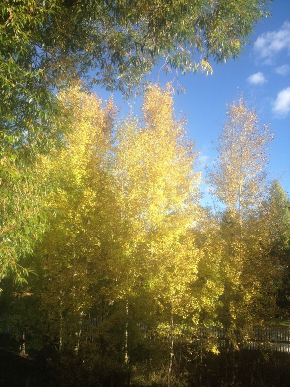fall_aspens_edit