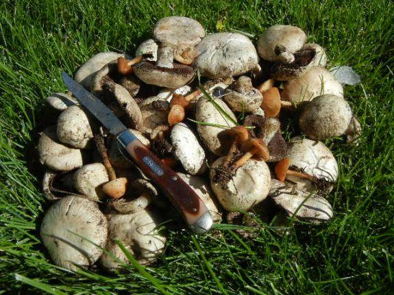 oct_mushrooms_part_2_003