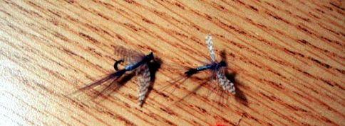 salmon_flys_flats_flys_003_edit_crop