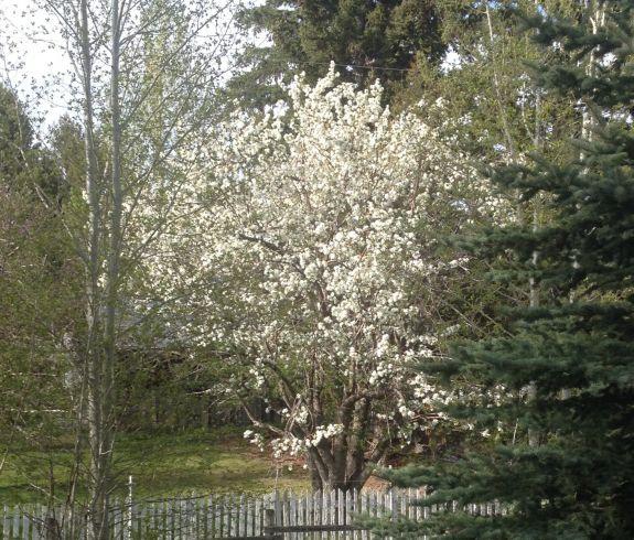 spring_in_Montana_edit_1